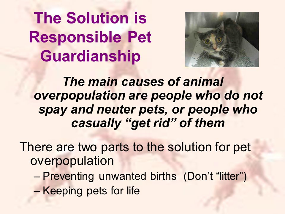 The Solution is Responsible Pet Guardianship The main causes of animal overpopulation are people who do not spay and neuter pets, or people who casually get rid of them There are two parts to the solution for pet overpopulation –Preventing unwanted births (Don't litter ) –Keeping pets for life