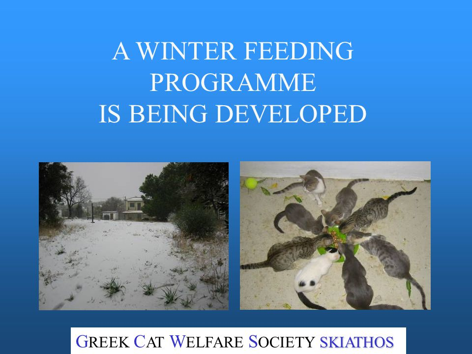 AFTER RECOVERY, HOMELESS CATS ARE RELEASED. SKIATHOS G REEK C AT W ELFARE S OCIETY SKIATHOS
