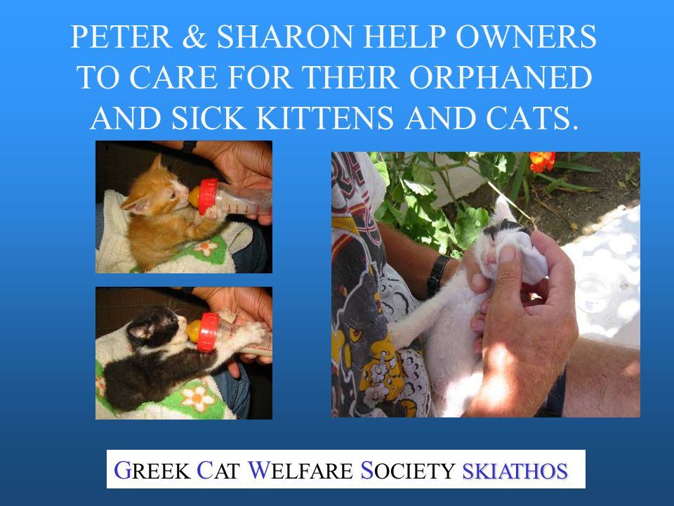 PETER & SHARON HELP OWNERS TO CARE FOR THEIR ORPHANED AND SICK KITTENS AND CATS.