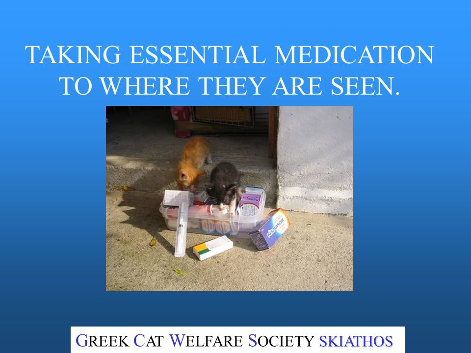 SHARON & PETER TRY TO HELP IF THEY SEE HOMELESS CATS WHICH MAY NEED TREATMENT SKIATHOS G REEK C AT W ELFARE S OCIETY SKIATHOS