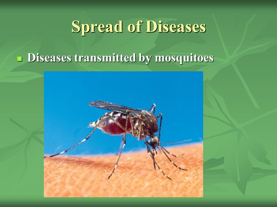 Spread of Diseases Diseases transmitted by mosquitoes Diseases transmitted by mosquitoes