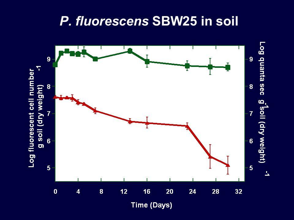 P. fluorescens SBW25 in soil