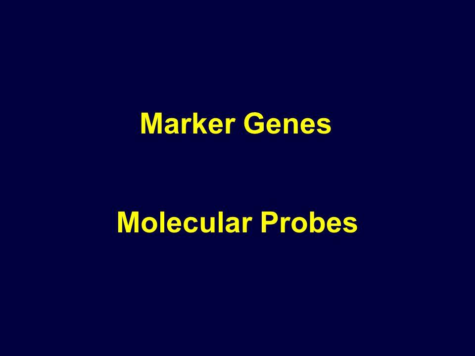 Molecular Probes Marker Genes