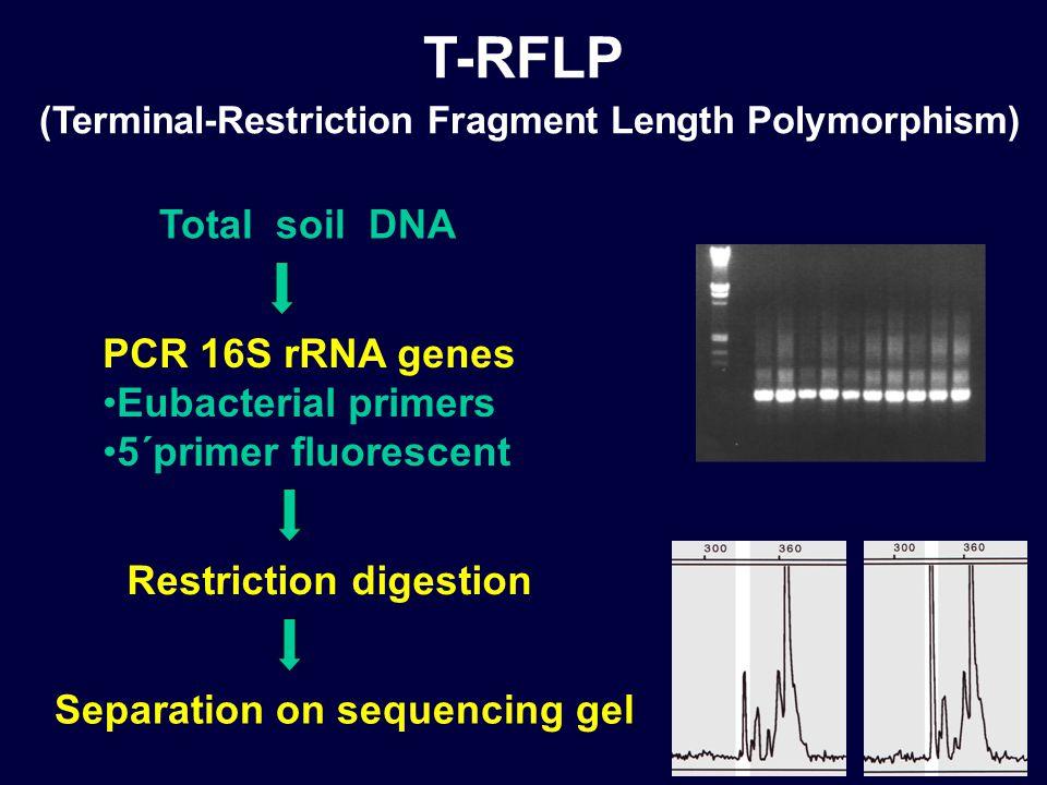 Total soil DNA Restriction digestion PCR 16S rRNA genes Eubacterial primers 5´primer fluorescent Separation on sequencing gel T-RFLP (Terminal-Restriction Fragment Length Polymorphism)