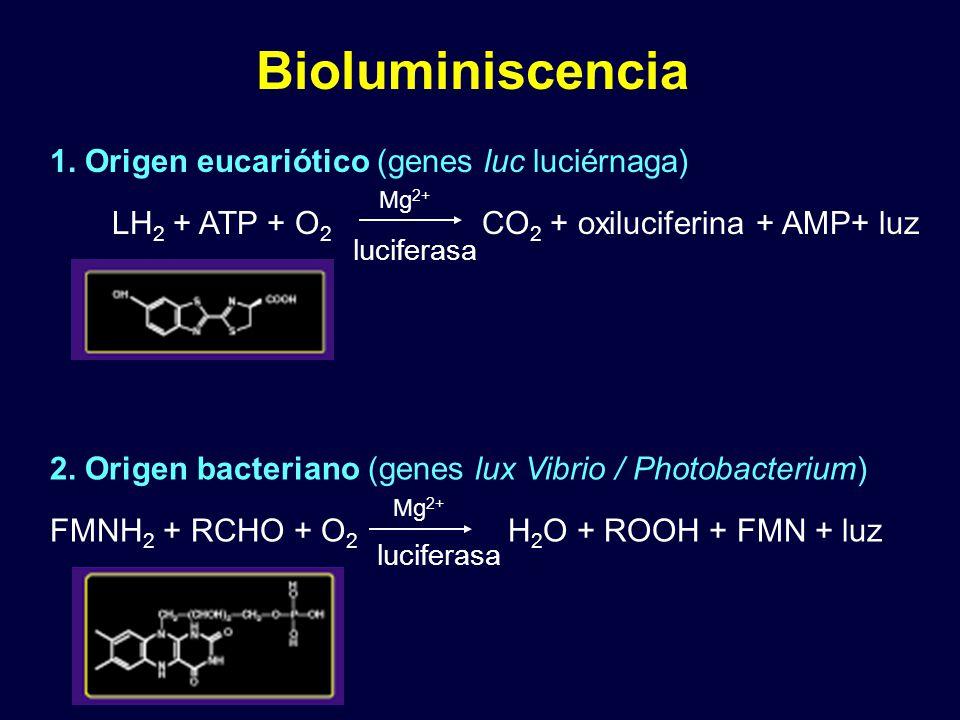 Bioluminiscencia 1.