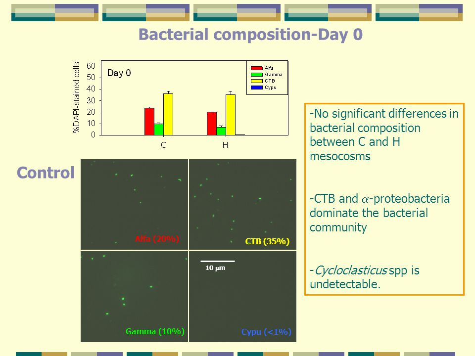 -No significant differences in bacterial composition between C and H mesocosms -CTB and  -proteobacteria dominate the bacterial community -Cycloclasticus spp is undetectable.