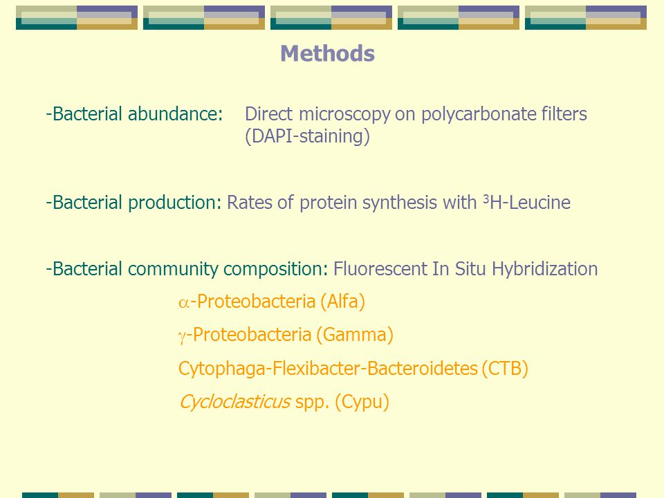 Methods -Bacterial abundance: Direct microscopy on polycarbonate filters (DAPI-staining) -Bacterial production: Rates of protein synthesis with 3 H-Leucine -Bacterial community composition: Fluorescent In Situ Hybridization  -Proteobacteria (Alfa)  -Proteobacteria (Gamma) Cytophaga-Flexibacter-Bacteroidetes (CTB) Cycloclasticus spp.