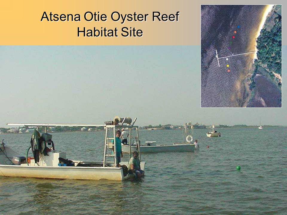Atsena Otie Oyster Reef Habitat Site