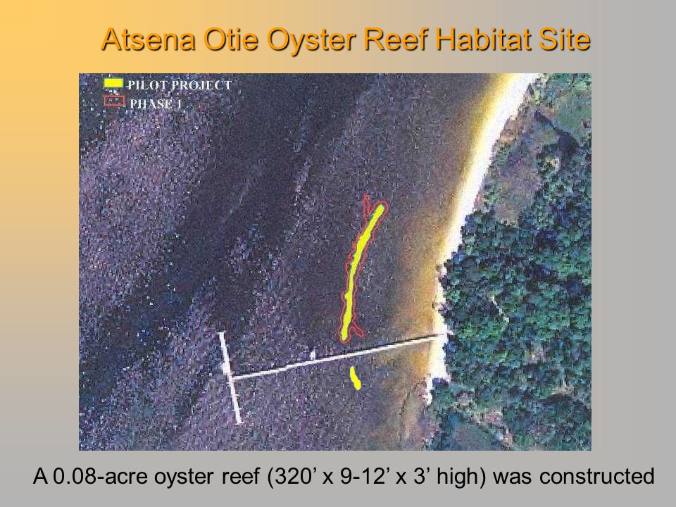 Atsena Otie Oyster Reef Habitat Site A 0.08-acre oyster reef (320' x 9-12' x 3' high) was constructed