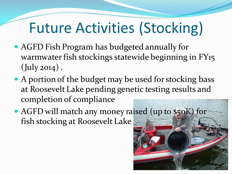 Future Activities (Stocking) AGFD Fish Program has budgeted annually for warmwater fish stockings statewide beginning in FY15 (July 2014). A portion o