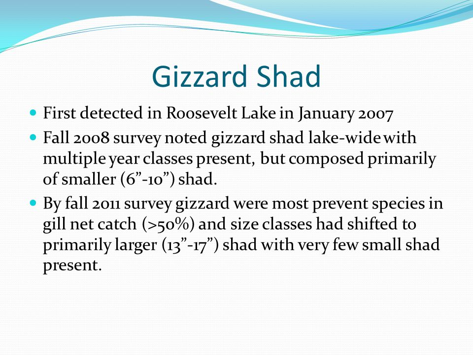 Gizzard Shad CPUE