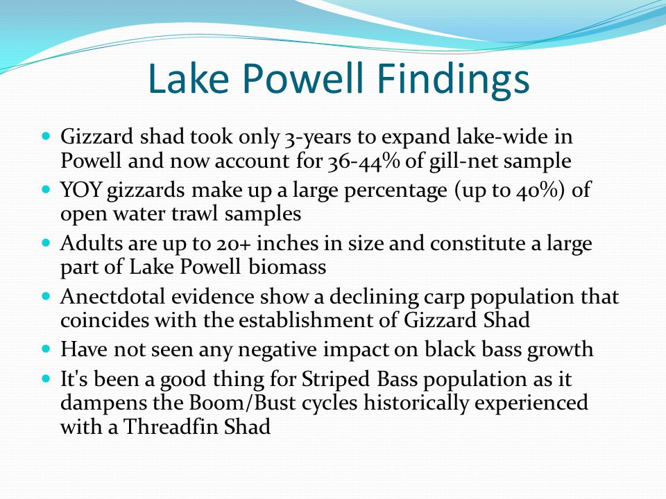 Future Activities (Surveys) Planned for Roosevelt Lake in October 2013 and Apache Lake in April 2014 Additionally, crappie surveys will take place at Roosevelt Lake spring 2014 to determine most effective sampling techniques All gizzard shad collected associated with these effort will be euthanized.