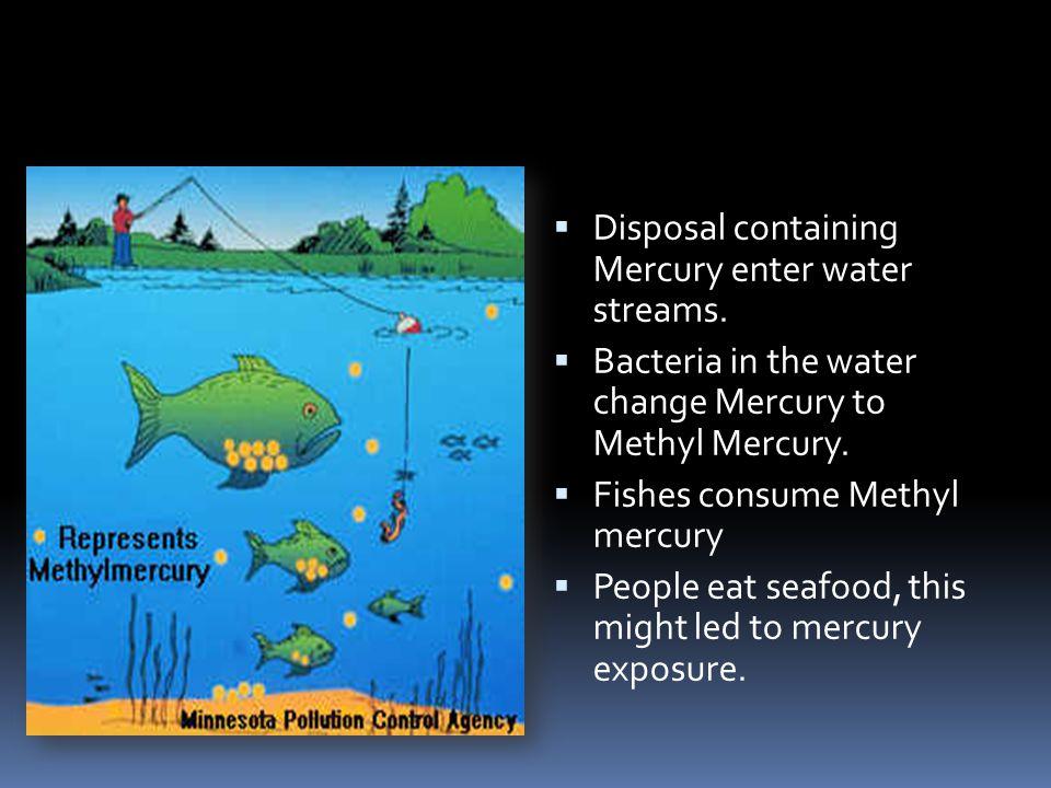  Disposal containing Mercury enter water streams.  Bacteria in the water change Mercury to Methyl Mercury.  Fishes consume Methyl mercury  People
