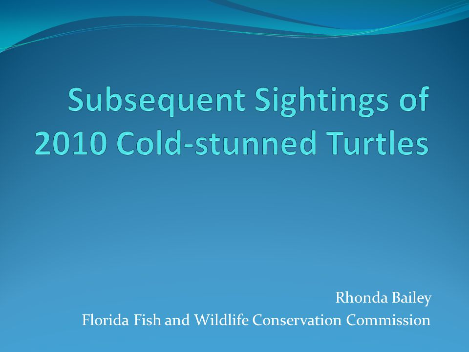 Recaptures of 2010 FL Panhandle Cold Stunned turtles 1,265 turtles released 15 Cc No recapture records 1197 Cm 109 recapture records 53 Lk No recapture records