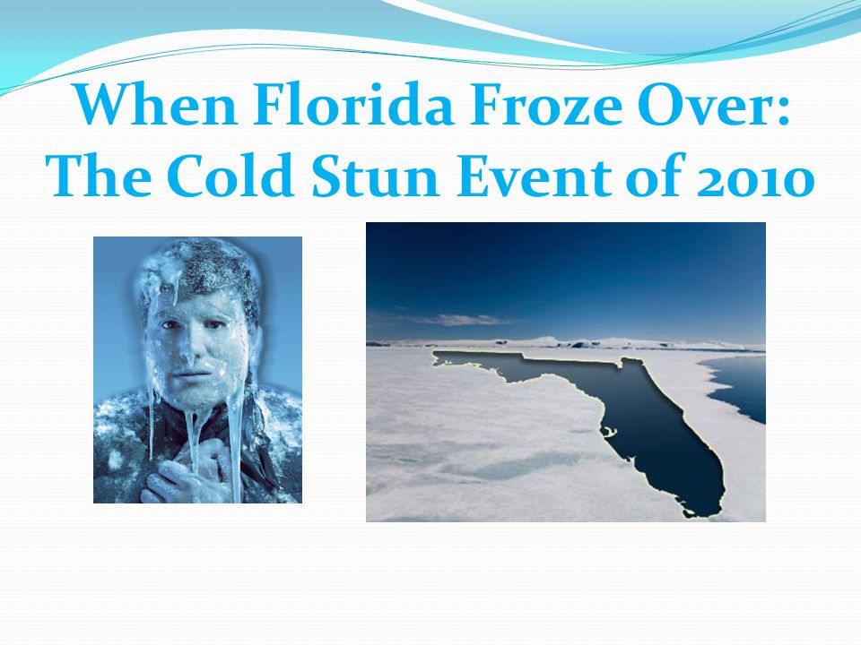 When Florida Froze Over: The Cold Stun Event of 2010