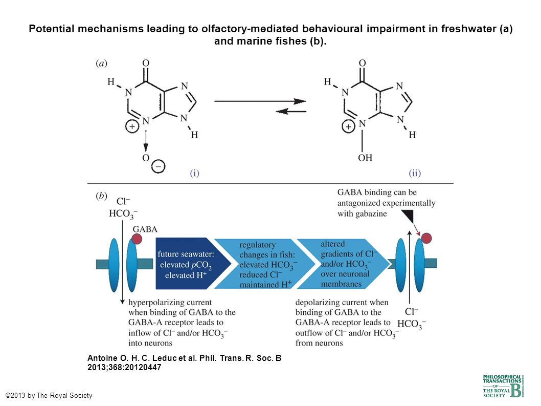 Potential mechanisms leading to olfactory-mediated behavioural impairment in freshwater (a) and marine fishes (b).