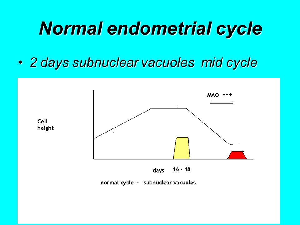 Normal endometrial cycle 2 days subnuclear vacuoles mid cycle2 days subnuclear vacuoles mid cycle