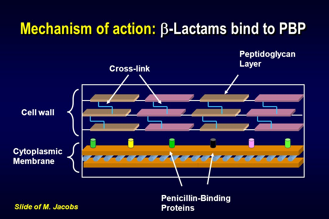 Mechanisms of resistance: alterations in target binding site Peptidoglycan Layer Cytoplasmic Membrane Penicillin-Binding Proteins Cross-link Cell wall Slide of M.