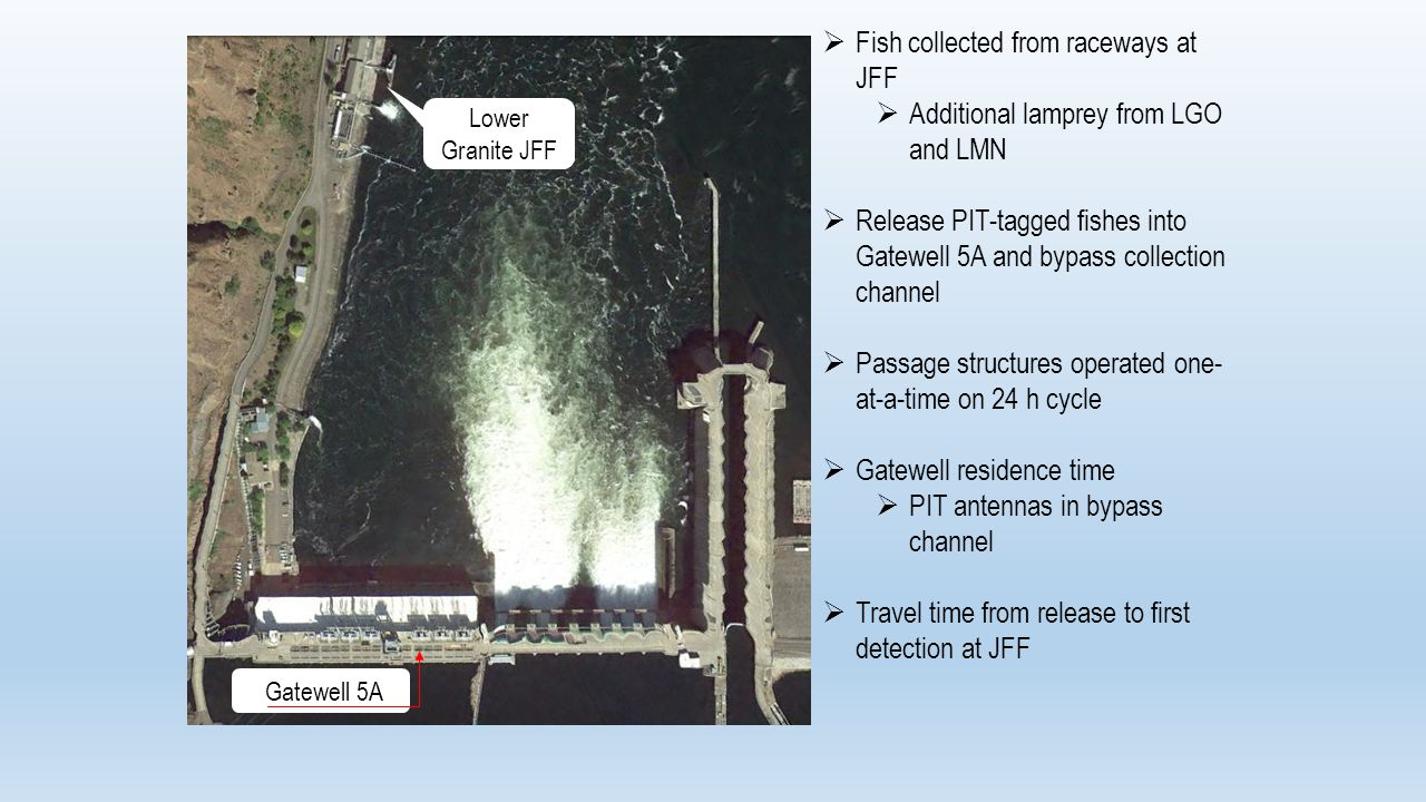  Fish collected from raceways at JFF  Additional lamprey from LGO and LMN  Release PIT-tagged fishes into Gatewell 5A and bypass collection channel  Passage structures operated one- at-a-time on 24 h cycle  Gatewell residence time  PIT antennas in bypass channel  Travel time from release to first detection at JFF Gatewell 5A Lower Granite JFF