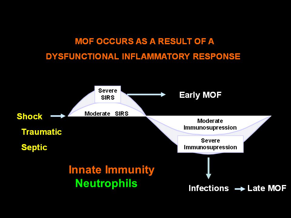 Innate Immunity Neutrophils