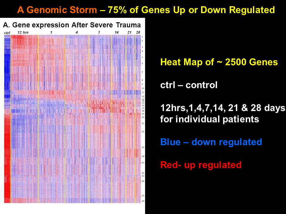 A Genomic Storm – 75% of Genes Up or Down Regulated A.