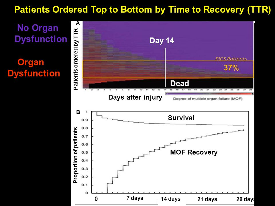 Patients Ordered Top to Bottom by Time to Recovery (TTR) No Organ Dysfunction Organ Dysfunction Dead Day 14 37% MOF Recovery Survival Days after injury 0 7 days 14 days 21 days28 days Proportion of patients Patients ordered by TTR B A