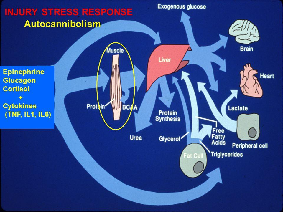 INJURY STRESS RESPONSE Autocannibolism Epinephrine Glucagon Cortisol + Cytokines (TNF, IL1, IL6)