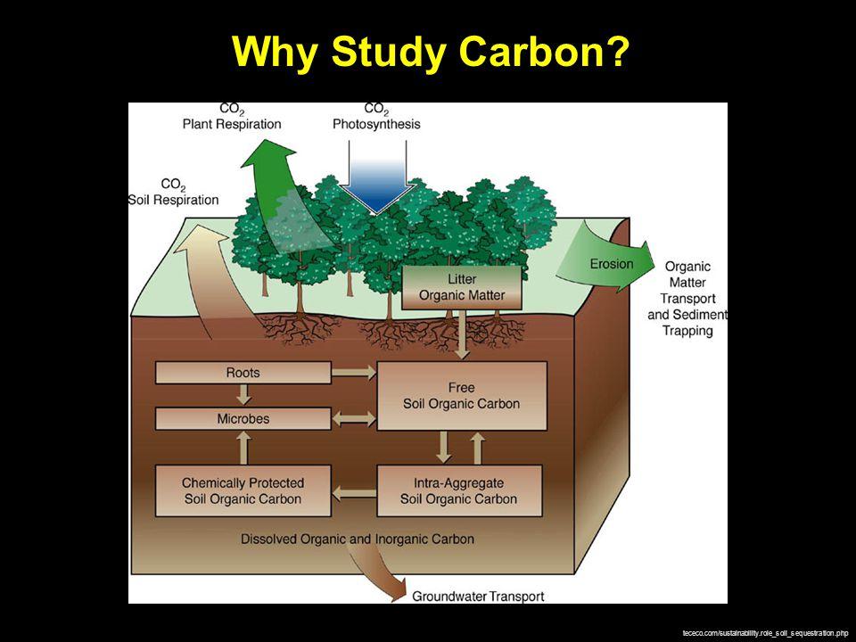 cargurus.com boston.com Sinks Sources oregrinder.com teara.govt.nz/en/atmosphere/1/1 thew2o.net/ carboncycle.aos.wisc.edu/land-uptake/ C Emissions Sources Sinks