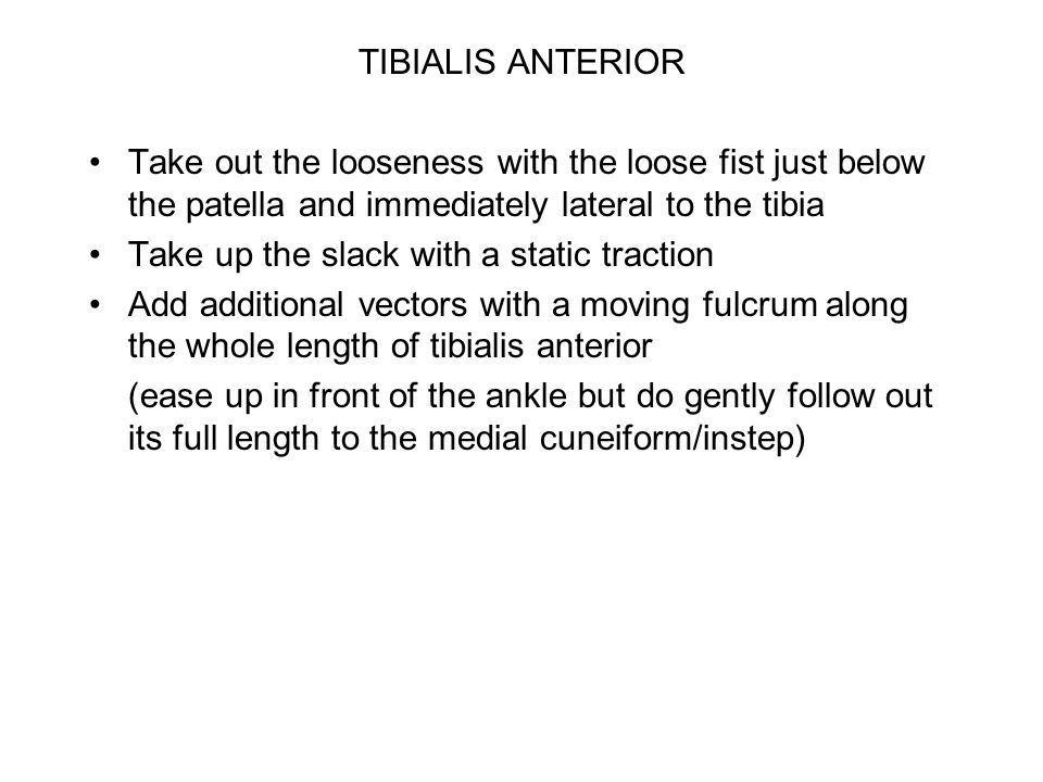 TIBIALIS ANTERIOR Take out the looseness with the loose fist just below the patella and immediately lateral to the tibia Take up the slack with a static traction Add additional vectors with a moving fulcrum along the whole length of tibialis anterior (ease up in front of the ankle but do gently follow out its full length to the medial cuneiform/instep)