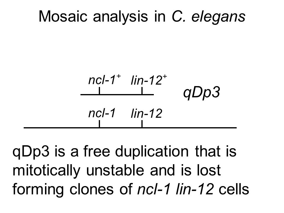Mosaic analysis in C.