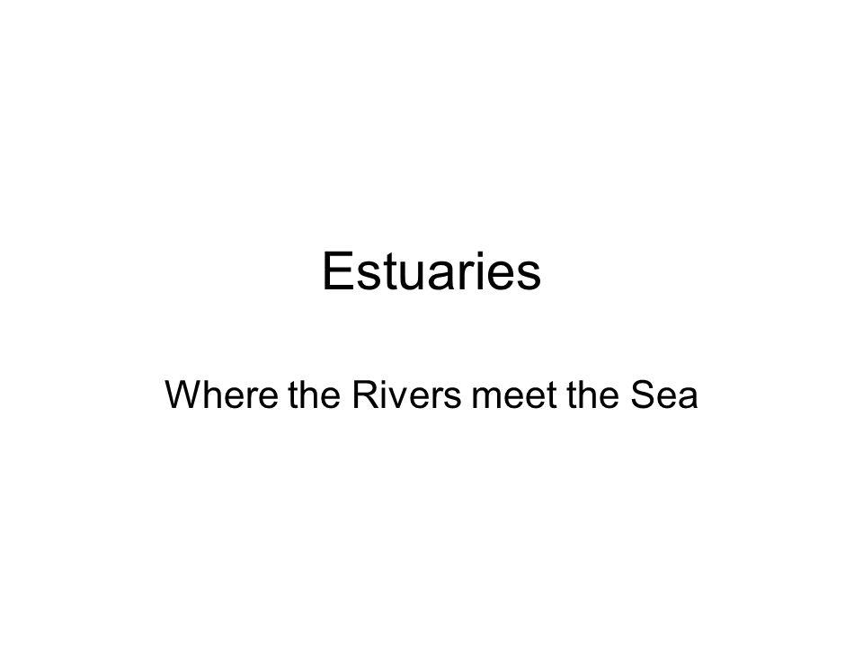 Estuaries Where the Rivers meet the Sea