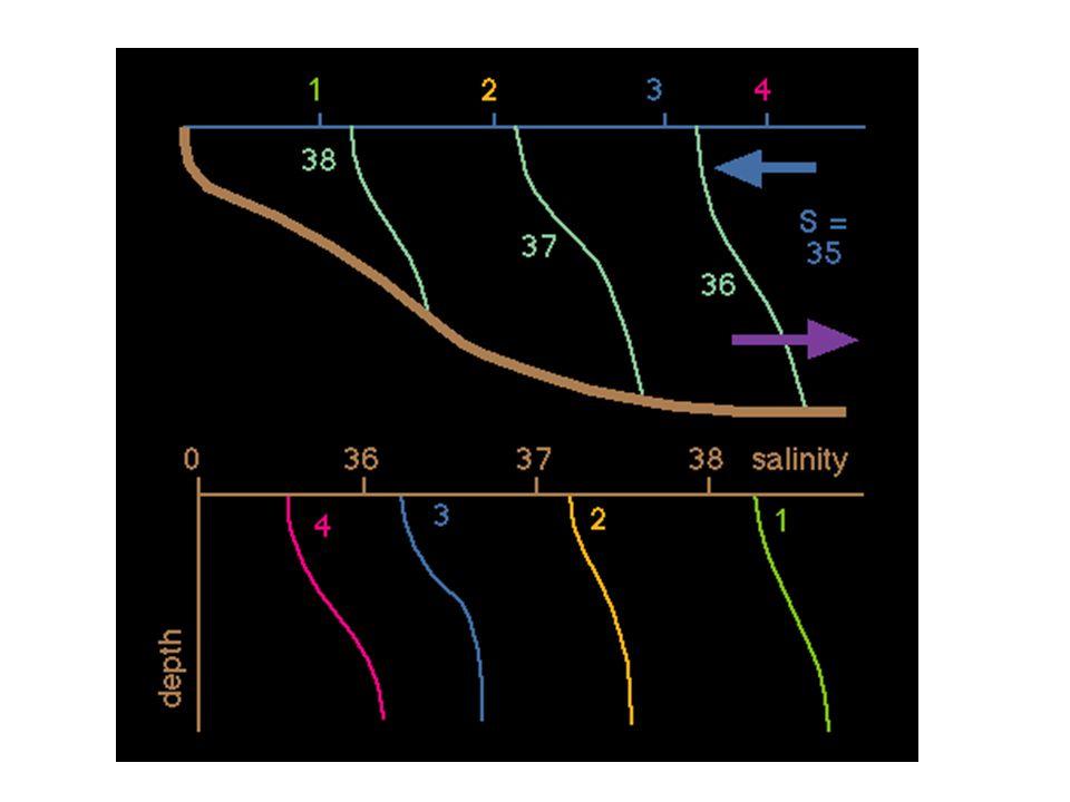 Components of the Peritidal System Salt marsh 1.High marsh 2.Low marsh Tidal channels Tidal deltas –Ebb –Flood Tidal mudflats