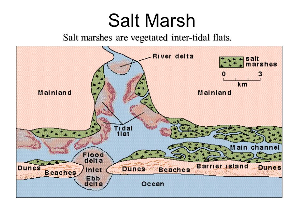 Salt Marsh Marsh divided into high and low marsh –high is region above high tide –low is region that's flooded daily –each has distinctive vegetations and grain size high has coarser sediments –Is a much more terrestrial-like environment because it is flooded only at times of extreme high tide.