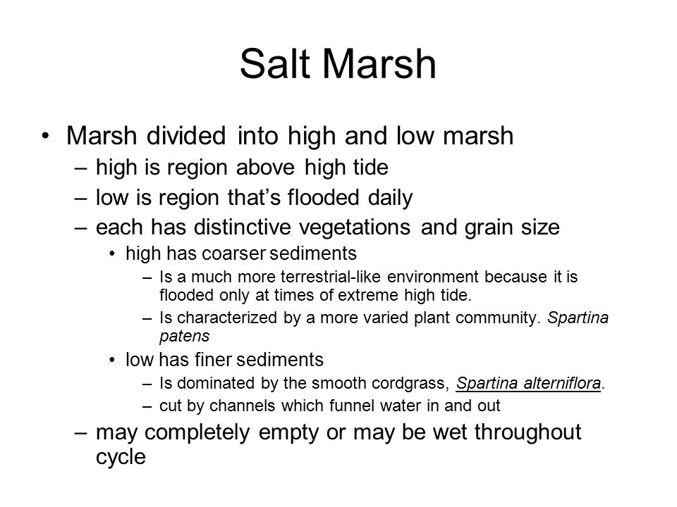 Salt Marsh Marsh divided into high and low marsh –high is region above high tide –low is region that's flooded daily –each has distinctive vegetations