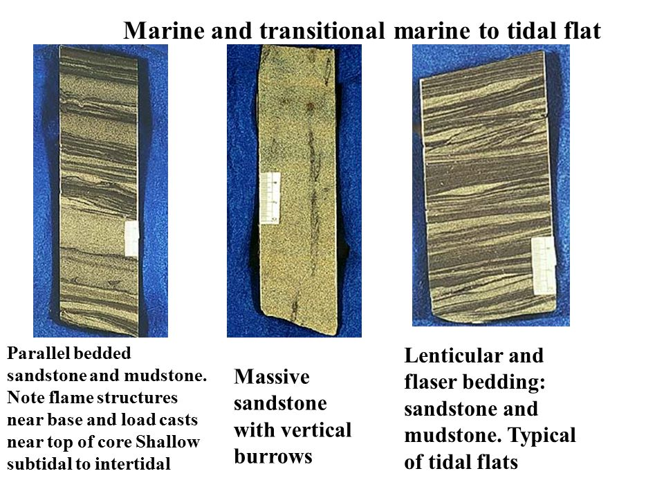 Marine and transitional marine to tidal flat Parallel bedded sandstone and mudstone. Note flame structures near base and load casts near top of core S