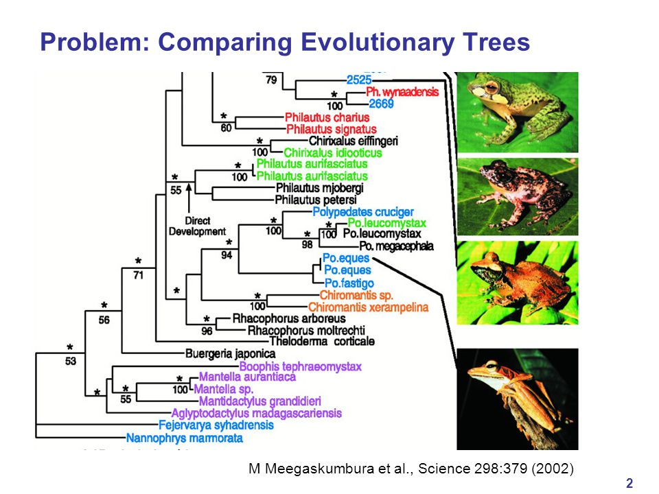 2 Problem: Comparing Evolutionary Trees M Meegaskumbura et al., Science 298:379 (2002)