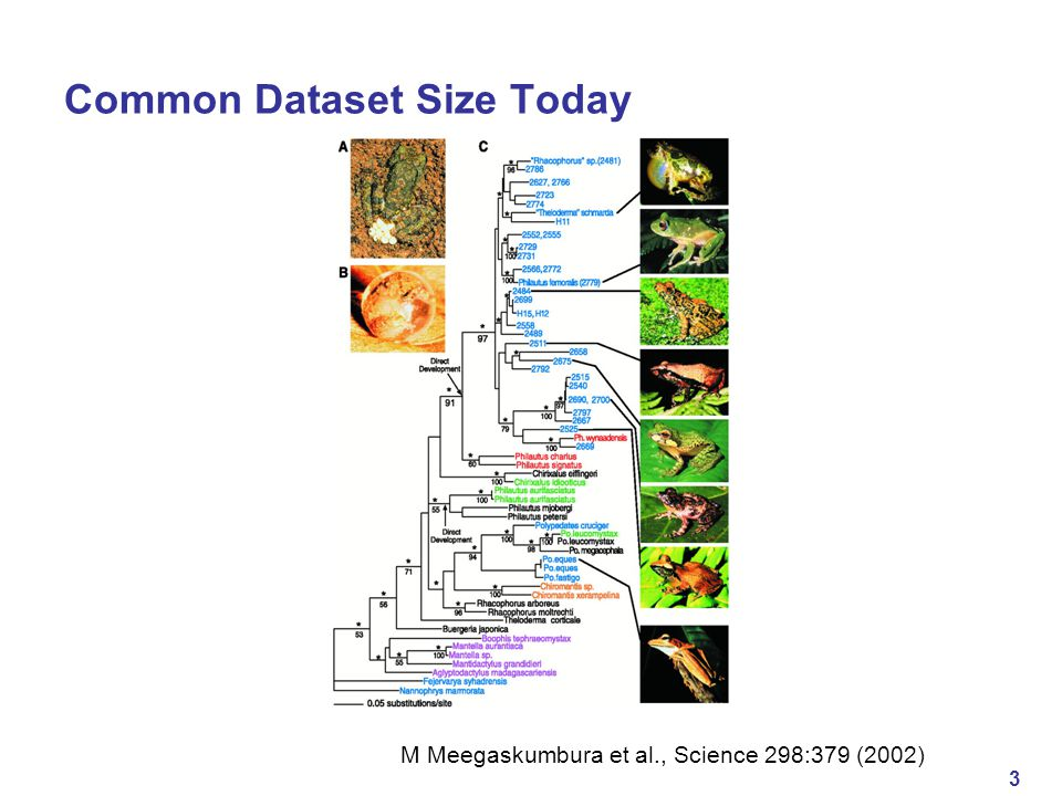 3 Common Dataset Size Today M Meegaskumbura et al., Science 298:379 (2002)