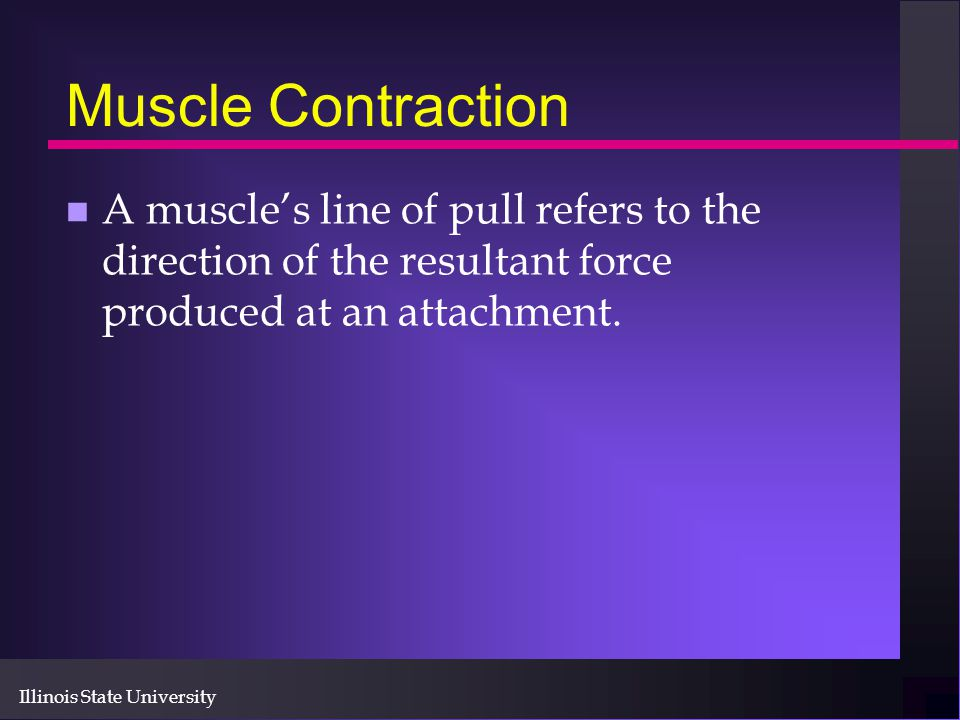 Illinois State University Muscle Contraction n A muscle's line of pull refers to the direction of the resultant force produced at an attachment.