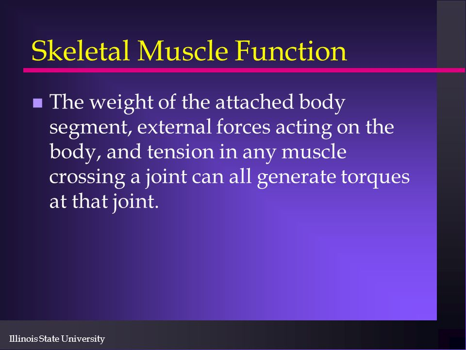 Illinois State University Skeletal Muscle Function n The weight of the attached body segment, external forces acting on the body, and tension in any m