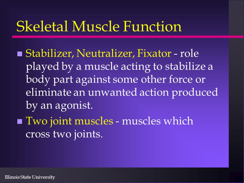 Illinois State University Skeletal Muscle Function n Stabilizer, Neutralizer, Fixator - role played by a muscle acting to stabilize a body part agains