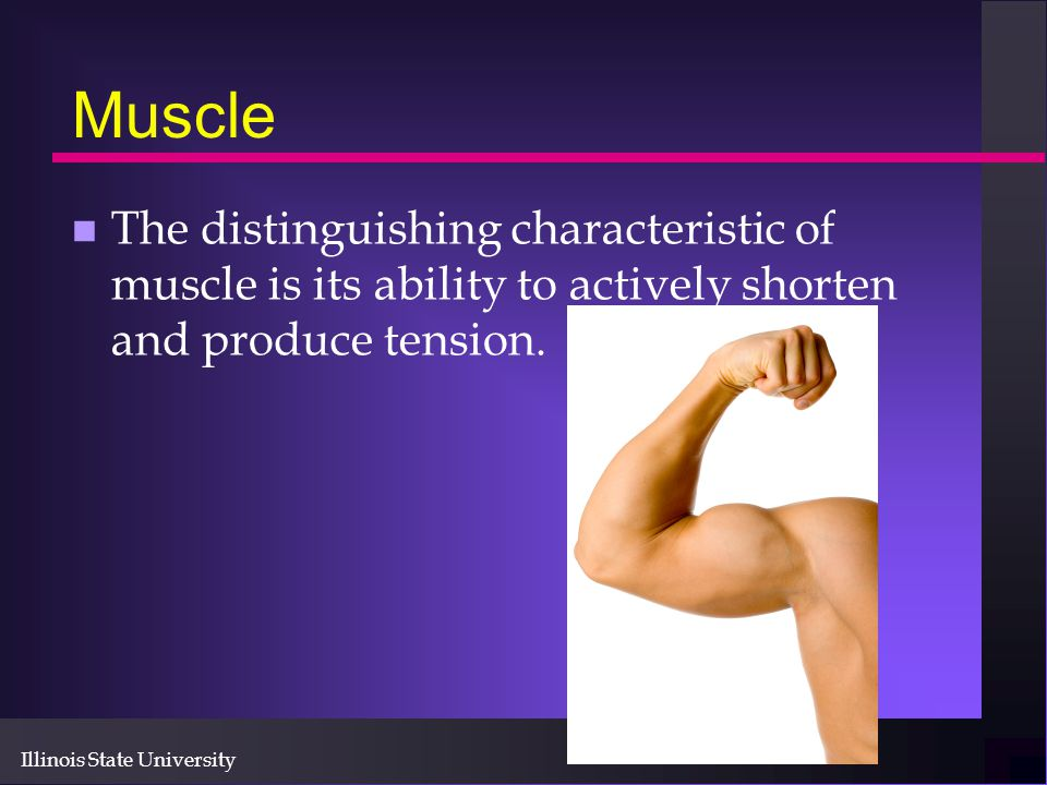 Illinois State University Muscle n The distinguishing characteristic of muscle is its ability to actively shorten and produce tension.
