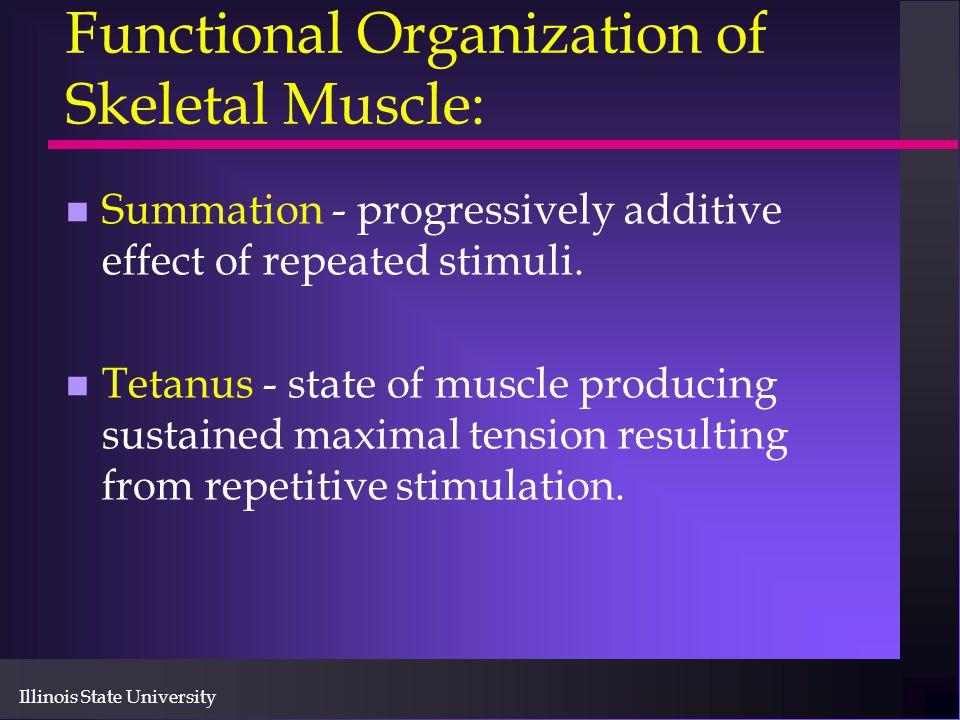 Illinois State University Functional Organization of Skeletal Muscle: n Summation - progressively additive effect of repeated stimuli. n Tetanus - sta