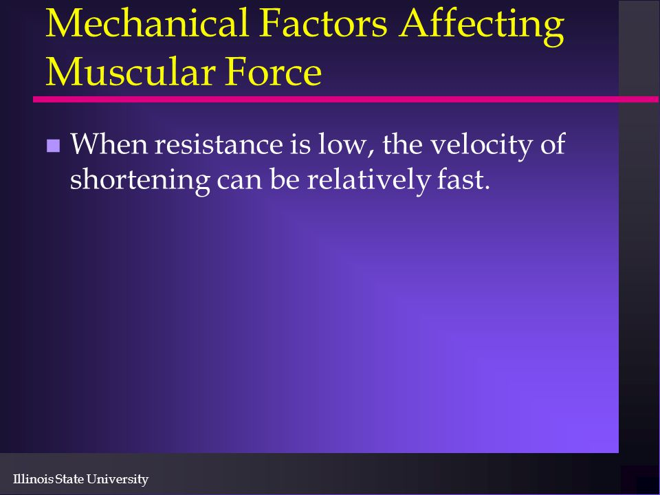 Illinois State University Mechanical Factors Affecting Muscular Force n When resistance is low, the velocity of shortening can be relatively fast.