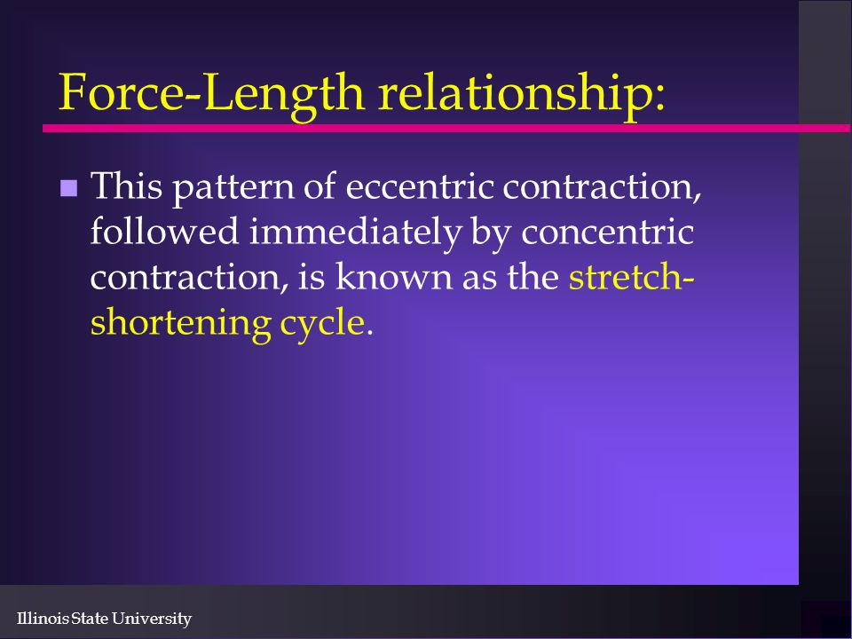 Illinois State University Force-Length relationship: n This pattern of eccentric contraction, followed immediately by concentric contraction, is known