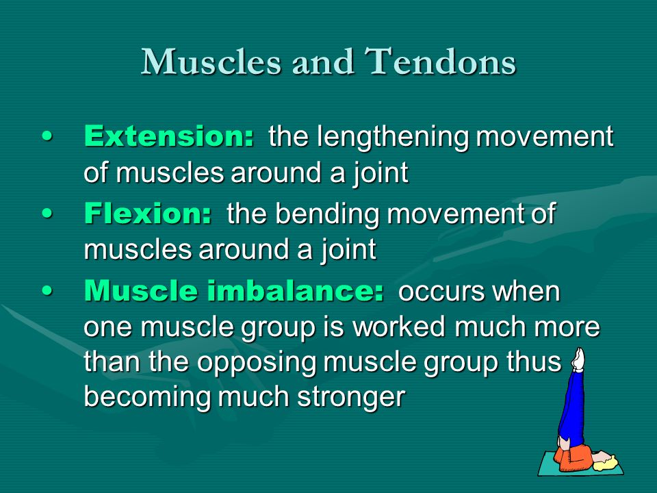 Muscles and Tendons Extension: the lengthening movement of muscles around a jointExtension: the lengthening movement of muscles around a joint Flexion: the bending movement of muscles around a jointFlexion: the bending movement of muscles around a joint Muscle imbalance: occurs when one muscle group is worked much more than the opposing muscle group thus becoming much strongerMuscle imbalance: occurs when one muscle group is worked much more than the opposing muscle group thus becoming much stronger