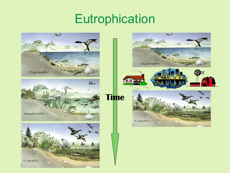 Eutrophication Time