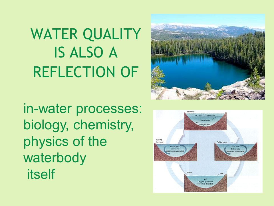 WATER QUALITY IS ALSO A REFLECTION OF in-water processes: biology, chemistry, physics of the waterbody itself