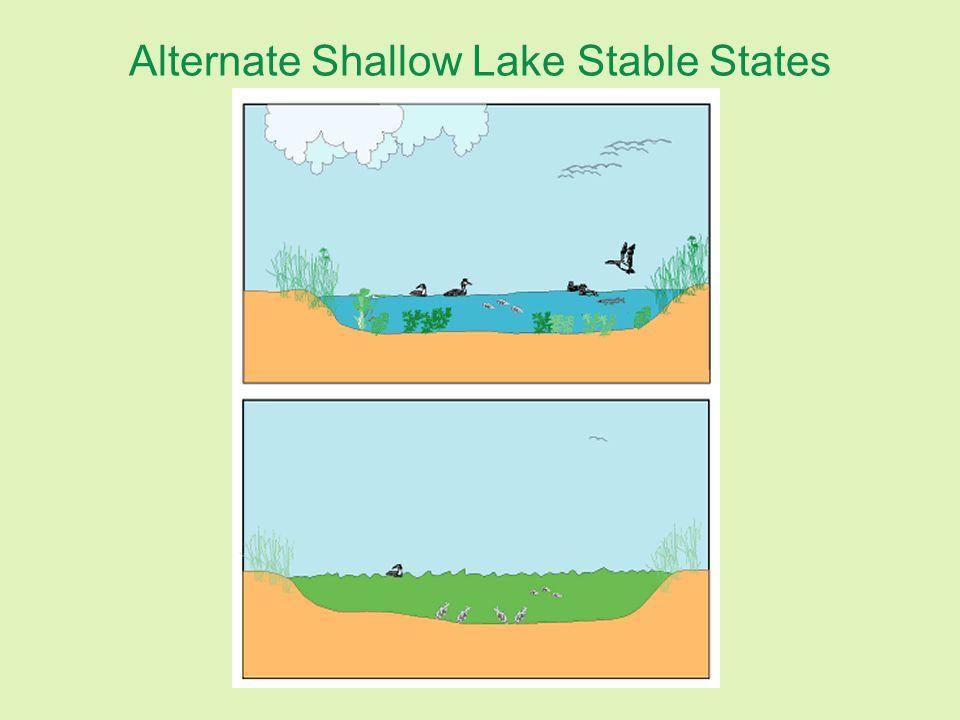 Alternate Shallow Lake Stable States