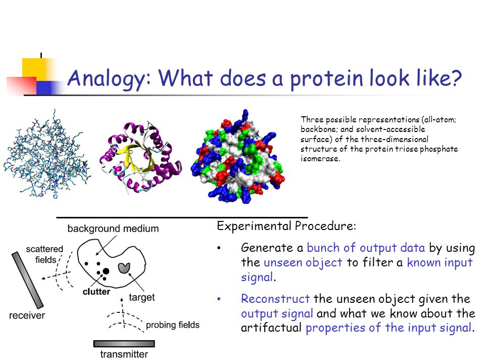 Analogy: What does a protein look like.