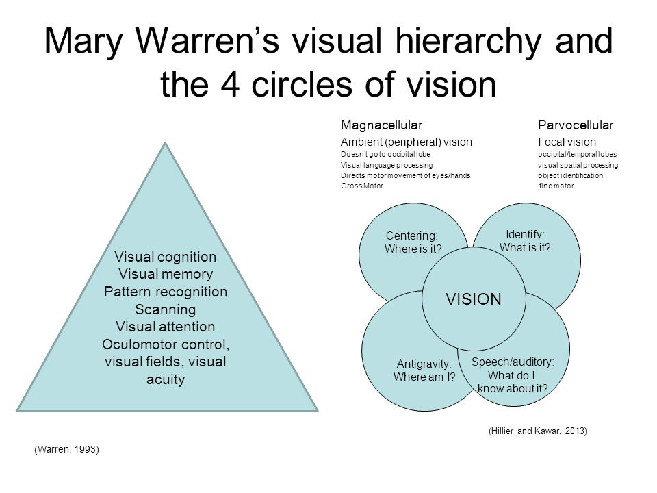 Mary Warren's visual hierarchy and the 4 circles of vision Magnacellular Parvocellular Ambient (peripheral) visionFocal vision Doesn't go to occipital lobeoccipital/temporal lobes Visual language processing visual spatial processing Directs motor movement of eyes/hands object identification Gross Motor fine motor Centering: Where is it.